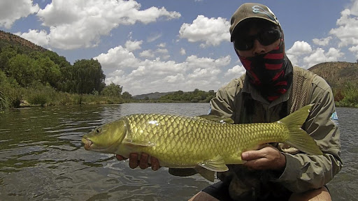 Perfect specimen: Largemouth yellowfish, an indigenous species, are renowned for the fight they put up and fishing tourists come from all over the world to catch them. But increased pollution in the Vaal River, from malfunctioning sewage works, is leading to fewer anglers. The river experienced a mass fish die-off in July. Picture: YOUTUBE