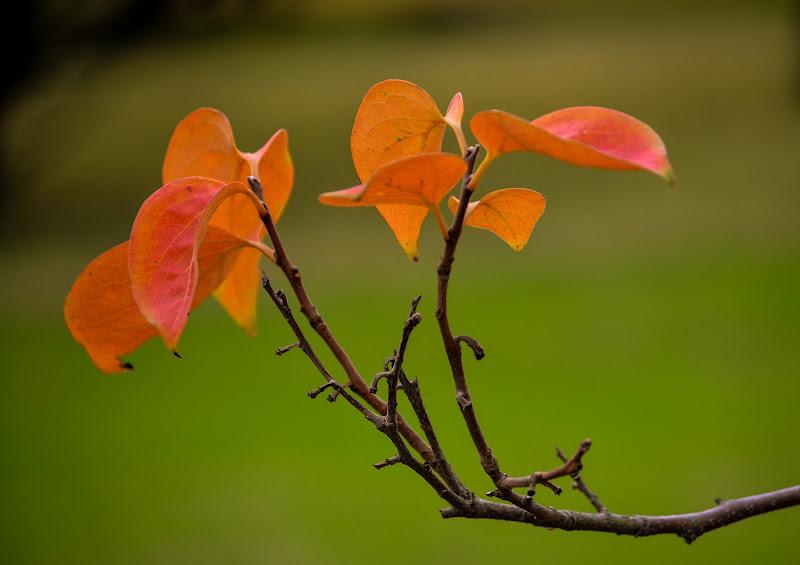 Ultime foglie di gianfi51