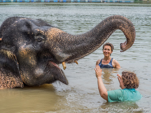 Stage d'éléphanthérapie Chantal Vereyen