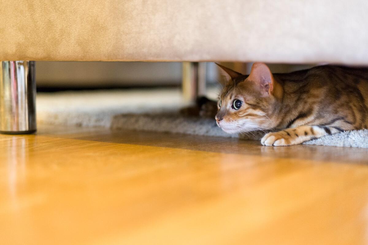 les chats ont parfois peur des inconnus sur leur territoire