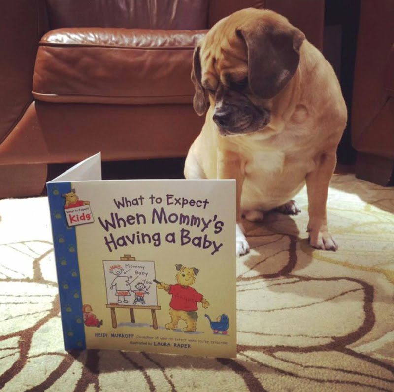 20 Most Clever And Cute Pregnancy Announcements Ever