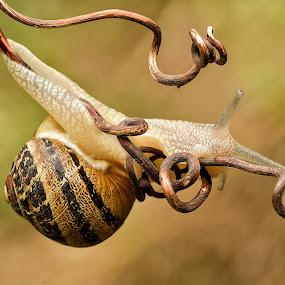 Snails by Roberta Sala - Animals Other ( wild animal, macro, nature, macro photography, wildlife )