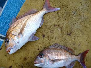 Photo: 真鯛のダブル!またまた船頭さん! 結局、真鯛10匹釣りました!他の方々は・・・次、ガンバりましょー!