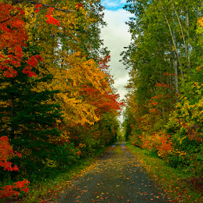 Trail of Colour by Rita Taylor - Landscapes Forests ( autumn. trail, leaves, color,  )