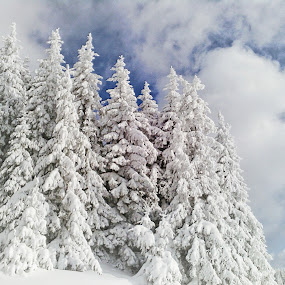 Winter Beauty by Stoyan Baev - Landscapes Forests ( clouds, sky, winter, mountain, snow, trees, pine )