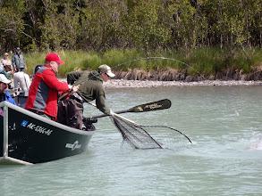 Photo: Nigel Fox of Alaska Drift Away Fishing about to put a Kasilof river King salmon in the net.