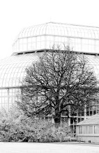 Photo: No Snow this Winter   I am giving this photo in for #throwawaythursday #TAT not because I think it's bad but because I didn't even see the tree when I shot this. I could just see the Greenhouse. How bad am I!!! For #throwawaythursday with +lynn langmade +Doug DeTraz +Michael Lawson +Mary Sass Clark +Paras Shah   #silhouettesonthursday