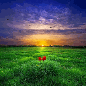 Green Land Sunset LWP apk
