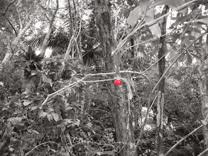 Photo: Clever photography shows the last red fruit on the tree