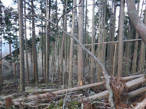 西尾根は倒木帯に