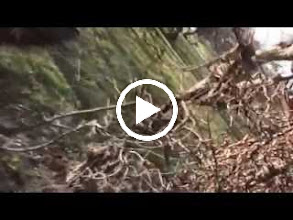 Video: austria, travel, labyrinth, schonbrunn, vienna, wien