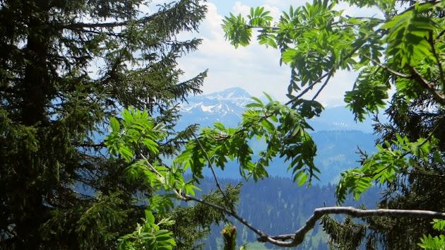 Hochgrat Panoramaweg Rast im Schatten Nagelfluhkette Allgäu