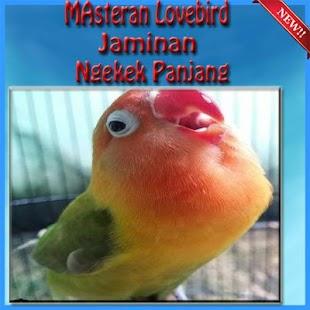 Masteran Lovebird Jamin Ngekek Panjang - náhled