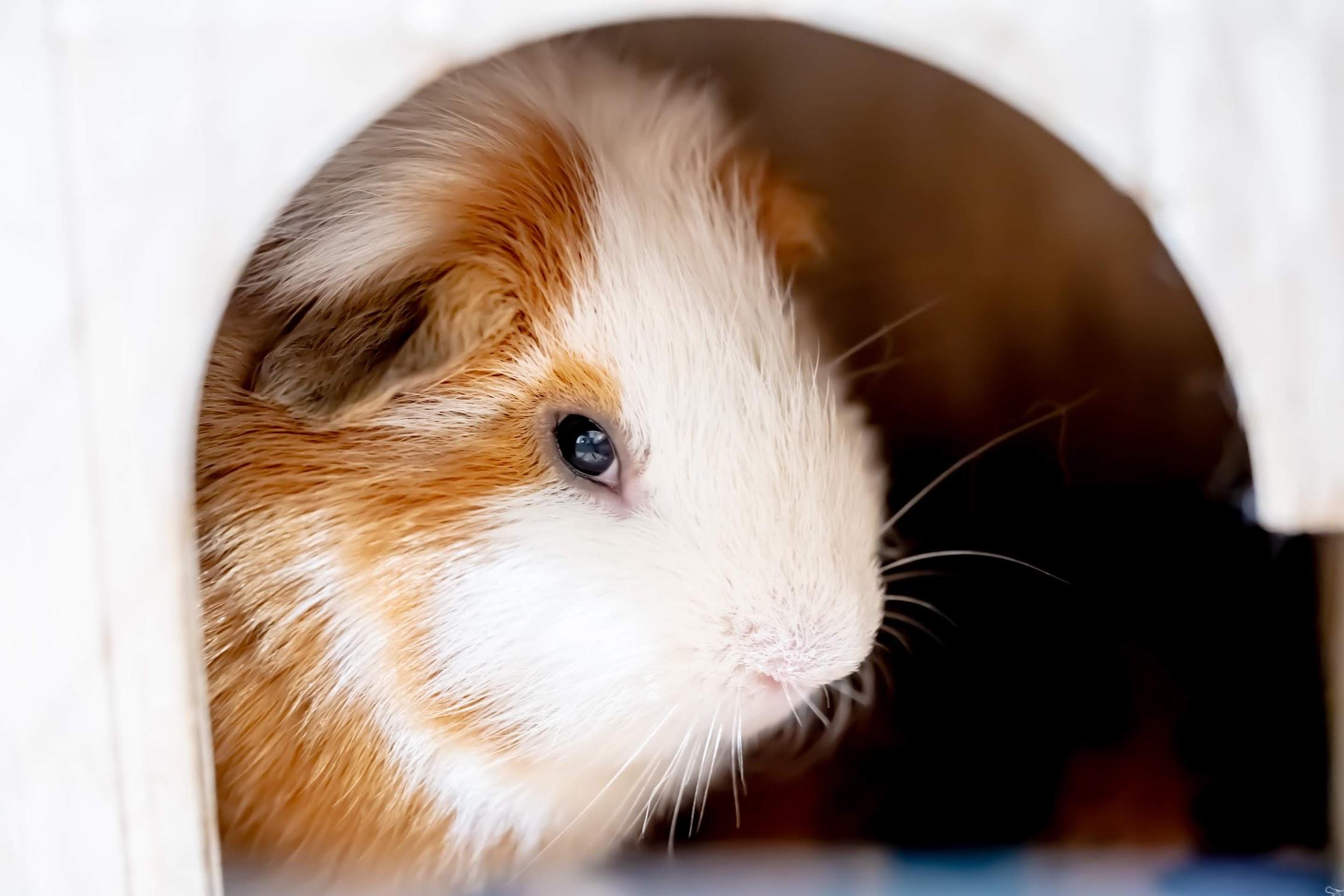 Tenpozan Anipa rabbits4