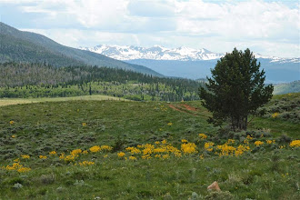 Photo: Balsamroot with the Mummies in the background.
