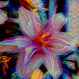 Lily abstract colorful by Cassy 67 - Digital Art Abstract ( digital, love, harmony, flowers, abstract art, abstract, lilies, creative, flower, digital art, modern, light, style, colorful, energy, fashion )