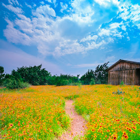 Come to Relax by Sun Hwang - Landscapes Mountains & Hills ( green, texas, state park, cloud, wild flowers )