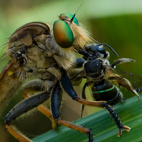 Robber and Prey by Yan Kebak - Animals Insects & Spiders