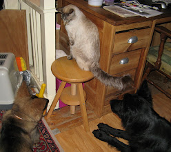 Photo: En als de katers eten, dan zitten de honden ook op wacht