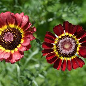 Illustration by J & M - Flowers Flower Gardens ( image, view, illustration )