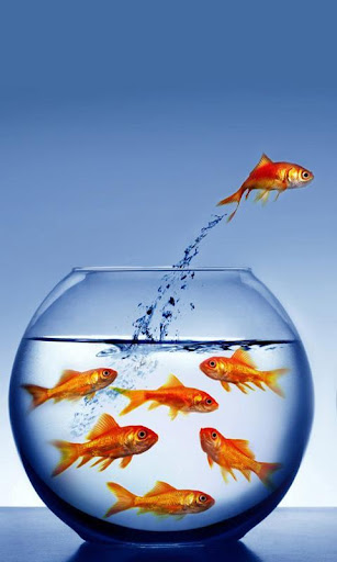 面白い魚の壁紙とテーマ