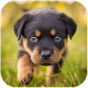 Rottweiler Dog Simulator icon