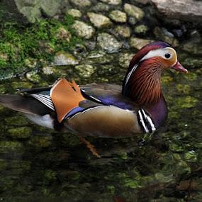 by Pitt N Sartoni - Animals Birds