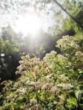 Photo: Beautiful little white flowers at Eastwood Park in Dayton, Ohio.