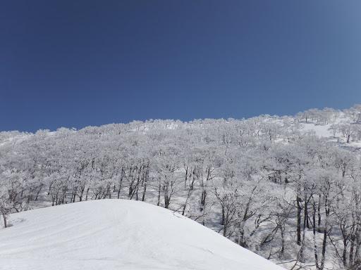 霧氷で白い斜面に
