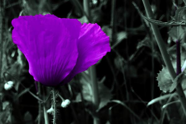Biodiversità di Rodema