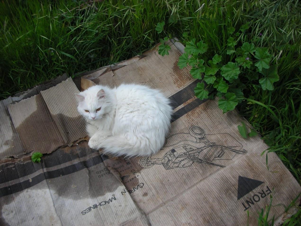 מוהוק, 2009, כפר תבור