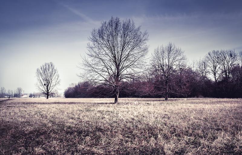 gli alberi si spogliano quando la gente si veste. di loris86me