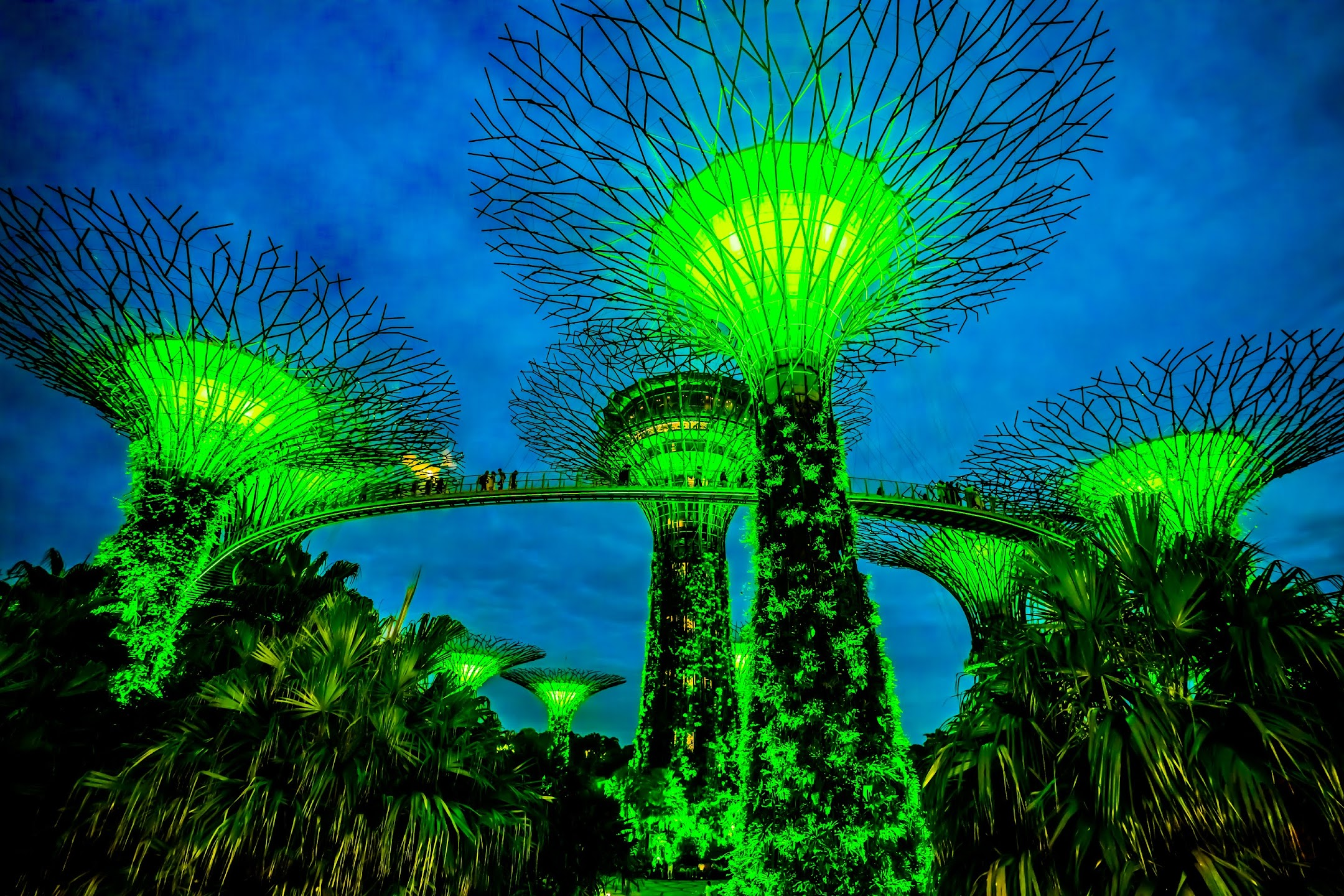 Singapore Gardens by the Bay light-up2