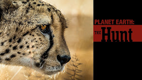 Planet Earth: The Hunt thumbnail