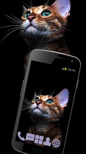 Pensive Kitten Theme GO ADW