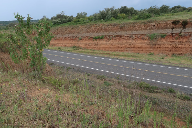 A section of Moi North Lake road where an overpass for wildlife is set to be constructed.