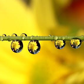 WaterDrops by JL Tan - Abstract Water Drops & Splashes ( water, macro, waterdrops )