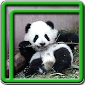 Cute Panda Live Wallpapers icon