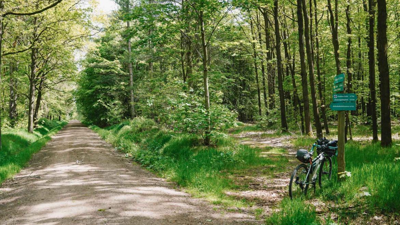 Fahrrad an ein Schild gelehnt und zwei Waldwege