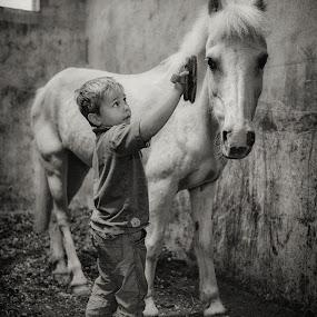 Grooming Snowy by Dan Horton-Szar ARPS - Black & White Portraits & People ( pony, ireland, monochrome, black and white, family, horse, children, cavan, stable, boy, brushing, portrait, milltown,  )