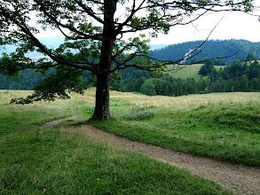 Photo: ...ale już później rozpoczyna się przyjemny odcinek, wąski singiel na polanach gdzieniegdzie poprzeplatany korzennymi sekcjami.