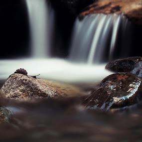 Fallen leaf by Haavard Lien - Nature Up Close Water ( water, stream, creek, long exposure, leaf, wet, rocks, river )