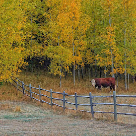 Jake in Autumn Pasture by Twin Wranglers Baker - Landscapes Forests (  )