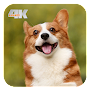 Free Dog Wallpapers APK icon