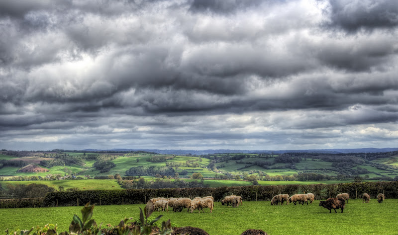Photo: Sheepscape Sheep in the landscape not far from Peterchurch on the in the England/Wales border area of Herefordshire. #sheep #landscapephotography +Landscape Photography #hqsplandscape +HQSP Landscape #ukphotographycommunity +UK Photography Community
