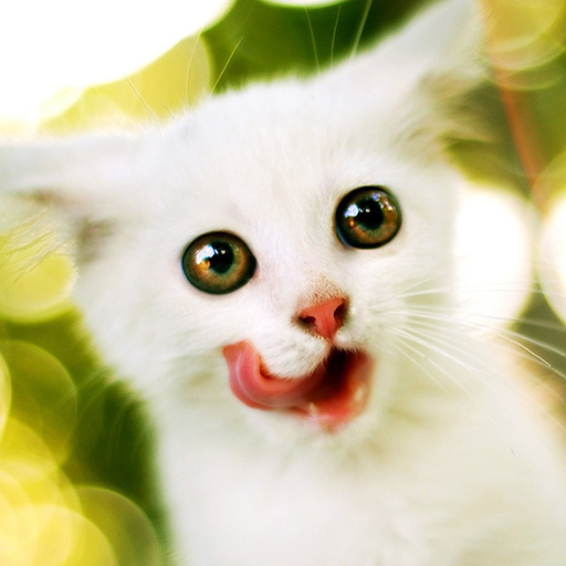 滑稽的小猫壁纸和主题 個人化 App LOGO-APP試玩