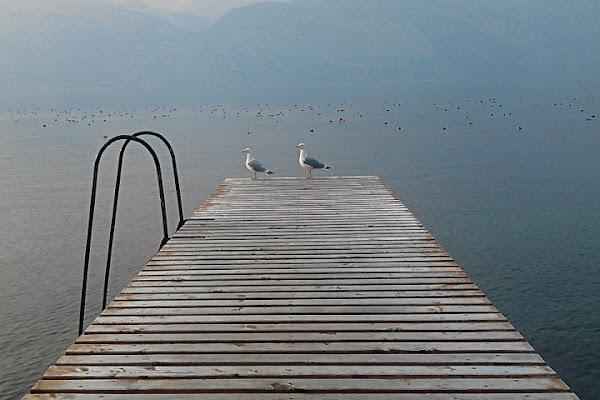 Gabbiani sul pontile. di zik_nik