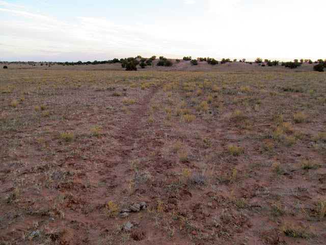 Old, closed road turned cow trail