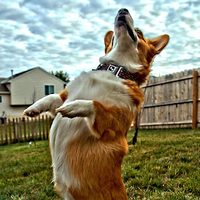 by Chloe Roethler - Animals - Dogs Playing