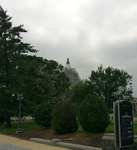 Photo: US Capitol through the trees